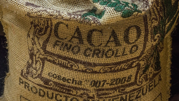 rauwe criollo cacao