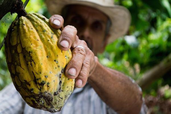 herkomst rauwe cacao